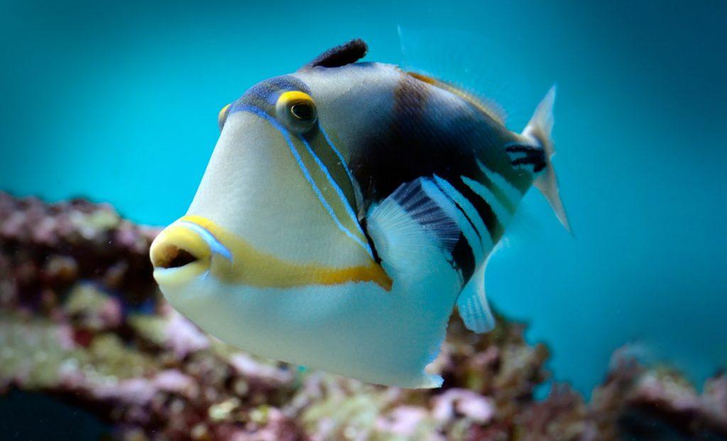 tips Mallorca,vakantie Mallorca,aquarium palma de mallorca,palma aquarium mallorca