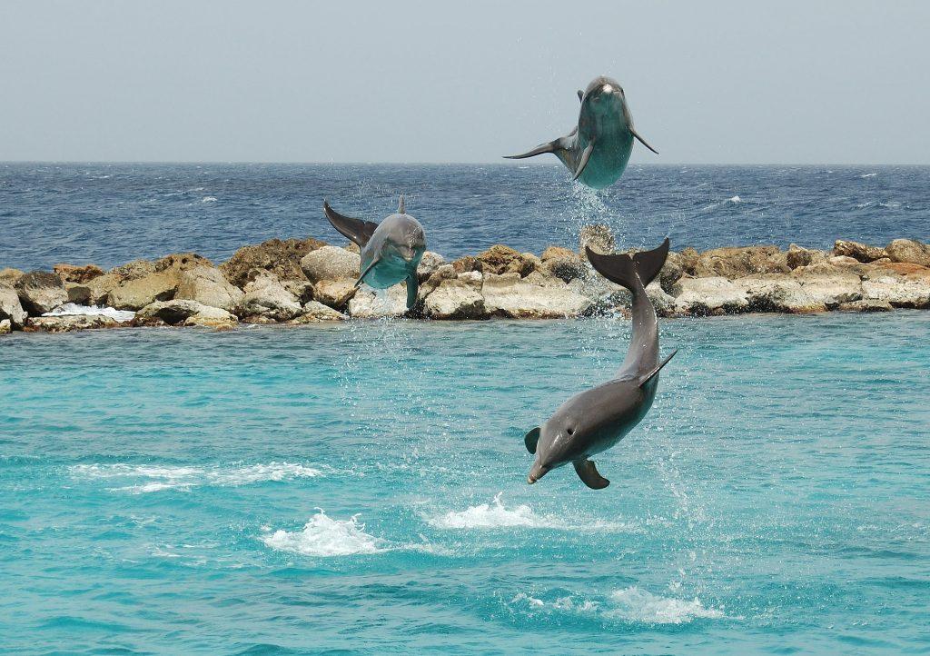 sea aquarium curacao,dolfijnen
