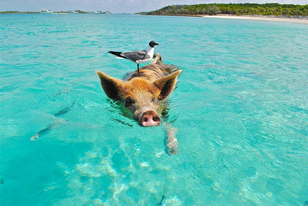 playa porto mari curacao,varken in zee