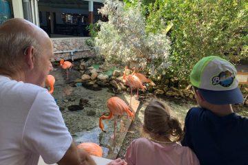 curacao sea aquarium,tips curacao,flamingo's voeren,leuk uitje curacao,tips curacao,curacao met kinderen